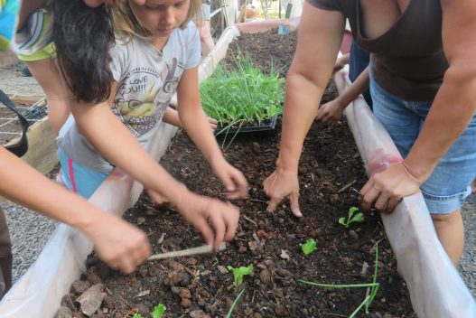 School & Community Gardens