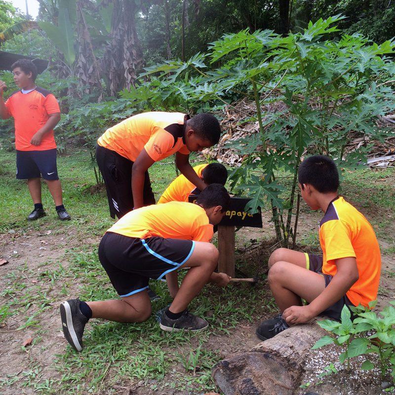 Organic gardens for schools