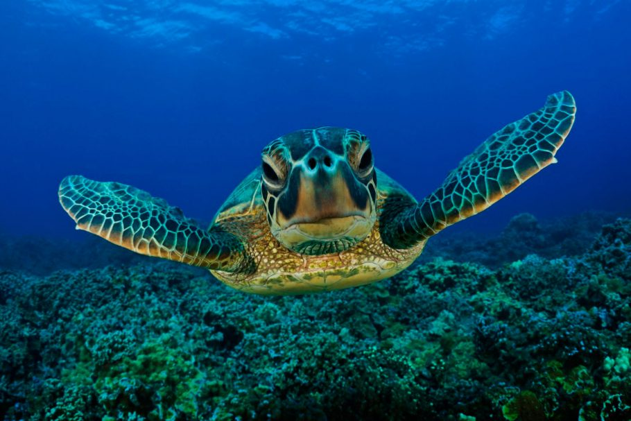 Sea Turtle Conservation 2017